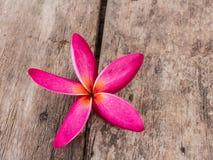 Plumeria rubra flower  on oldwoodbackground Royalty Free Stock Image