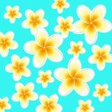 Plumeria background Stock Photography