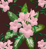 Plumeria seamless pattern. Seamless floral patterns with Plumeria pudica flower Stock Images