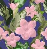 Plumeria seamless pattern. Seamless floral patterns with Plumeria pudica flower Royalty Free Stock Photos