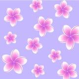 Plumeria background Royalty Free Stock Photos