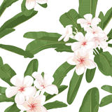 Plumeria seamless pattern Stock Photography