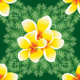 Plumeria seamless vector pattern palm leaves. Stock Photo