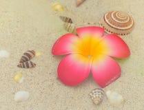 Plumeria and seashells on white sand Stock Photos