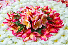 Plumeria setting health spa retreat Royalty Free Stock Photos