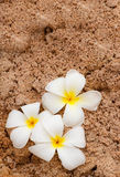Plumeria on soft sand Stock Photo