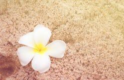 Plumeria on soft sand Stock Image