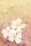 Plumeria on soft sand Stock Photo