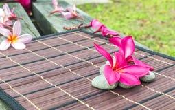 Plumeria spp Royalty Free Stock Photo