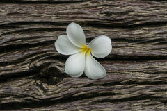 Plumeria on timber Stock Images