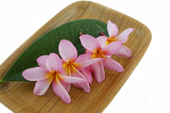 Plumeria on tray. Plumeria flower with leaf on wood tray Stock Images