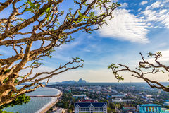 Plumeria tree with high view of city near the sea Royalty Free Stock Photo