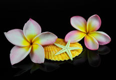 Plumeria tropical flower Stock Photos