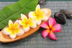 Plumeria tropical flower Royalty Free Stock Image