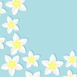 Plumeria Tropical flower icon set. Frangipani  Hawaii, Bali plant Flower frame corner. Blue background. Flat design Stock Photography