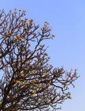 Plumeria und Niederlassung im Naturhintergrund Lizenzfreies Stockfoto