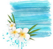 Plumeria on watercolor background Stock Image