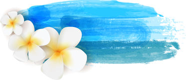Plumeria on watercolor banner Stock Photography