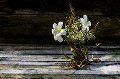 Plumeria wciąż życie Fotografia Stock