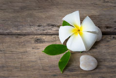 Plumeria. A plumeria on wooden background with green leaf abd stone Stock Images