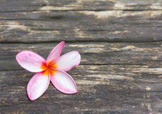 Plumeria on wooden floor background Royalty Free Stock Image