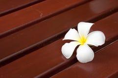 Plumeria. On wooden floor blackground Stock Photo