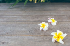 Plumeria. On wooden floor. Space for design and bokeh background royalty free stock photo
