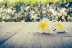 Plumeria. On wooden floor. Space for design and bokeh background stock image