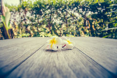 Plumeria. On wooden floor. Space for design and bokeh background royalty free stock photos