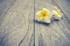 Plumeria. On wooden floor. Space for design and color pastel royalty free stock images