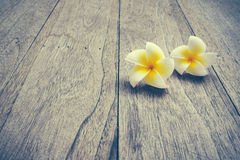 Plumeria. On wooden floor. Space for design and color pastel stock image