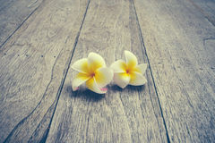 Plumeria. On wooden floor. Space for design and color pastel stock photo