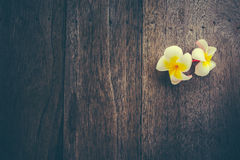 Plumeria. On wooden floor. Space for design and color pastel royalty free stock photos