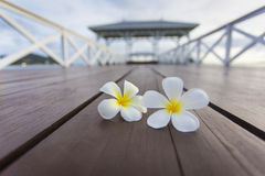 Plumeria on Wooden pier at Koh Si Chang island Stock Photos