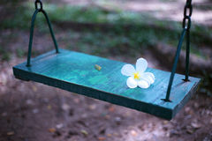 Plumeria on wooden swing Royalty Free Stock Images