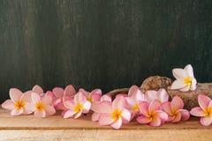 Plumeria z chalkboard tłem Zdjęcia Royalty Free