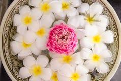 Plumeria zdrój kwitnie nad wodą z różowym lotosem Obraz Stock