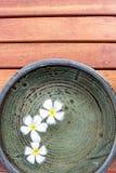 Plumeriabloem Stock Afbeeldingen