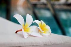Plumeriabloem en het blauwe detail van het zwembad gegolfte water Stock Afbeeldingen