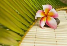 Plumeriablomma på stenen på kokosnötbladet Arkivfoton