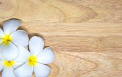 Plumeriablomma på träbakgrund Royaltyfria Bilder