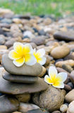 Plumeriablume auf Stein für Badekurort entspannen sich lizenzfreie stockfotografie