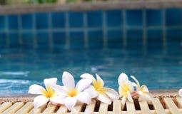 Plumeriablume und blauer Swimmingpool plätscherten Wasserdetail Stockfotografie