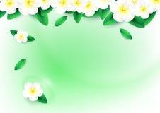 Plumeriablumen im grünen Wasserhintergrund Lizenzfreies Stockfoto