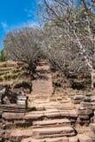 Plumeriablumenb?ume an den Ruinen des Bottich Phou-Khmertempels, Laos stockfoto