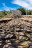 Plumeriablumenb?ume an den Ruinen des Bottich Phou-Khmertempels, Laos lizenzfreie stockfotografie