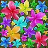 Plumerias Exotic Flowers Dream Royalty Free Stock Photo