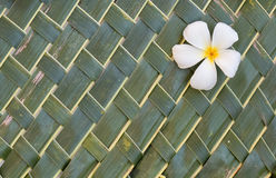Plumerias on green coconut leafs Stock Photos