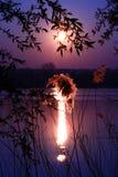 Plumero vegetal de la pluma en la corriente en la salida del sol fotografía de archivo