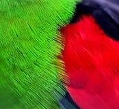 Plumes à ailes rouges de perroquet Images stock